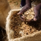 Gikanda Coffee Grower's Association has been awarded Fairtrade Status. Kate Holt.