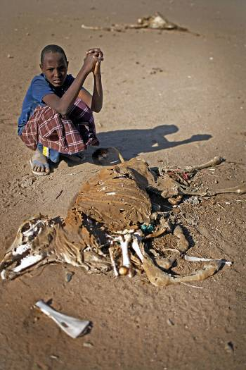 A young boy with what remains of his herd. Kate Holt.