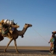 Afar nomadic women lead their camels, children and baby goats along a road near the town of Asayita. Kate Holt.