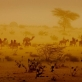 A caravan of camels walks through the desert in the middle of a dust storm near Mao. Kate Holt.