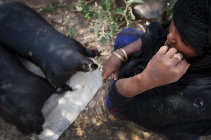 An Afar woman sits next to her water carriers made from goat skin in her community of Geega. Kate Holt.