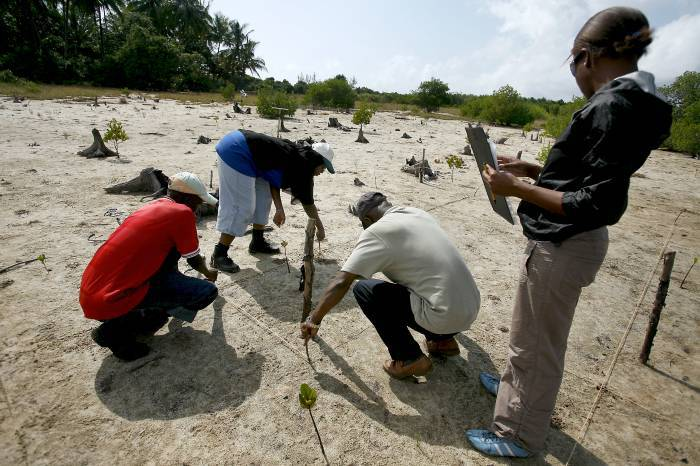 A group of Earthwatch volunteers measure off areas of soil. Kate Holt.
