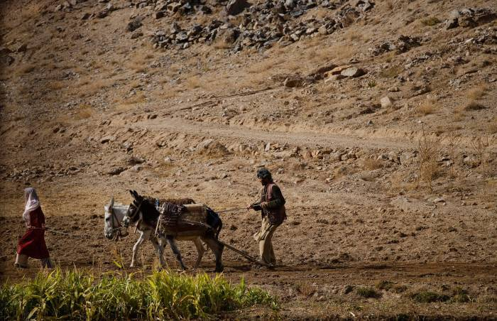 A girl leads donkeys while her father stands on the plough behind in a village in the region of Bamyan. Kate Holt.