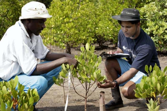 Kangana Amarsena, an Earthwatch volunteer from Sri Lanka, records data. Kate Holt.