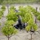 A view of newly planted mangroves at Kindondo, Gazi Bay, Kenya on the 27th July, 2008. Kate Holt.