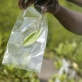 A sample of a mangrove plant leaf is placed in a bag for later examination. Kate Holt.