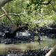 View of a Mangrove Swamp in Gazi Bay, Kenya on the 26th July, 2008. Kate Holt.