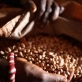 Galamo Dima, 45, a village elder shows the beans that she now sells to survive. Kate Holt.