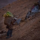 An old man carries food he has just harvested in a basket on his back up a hillside. Kate Holt.