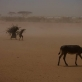 Two young girls walk through a dust storm with firewood on their backs. Kate Holt.