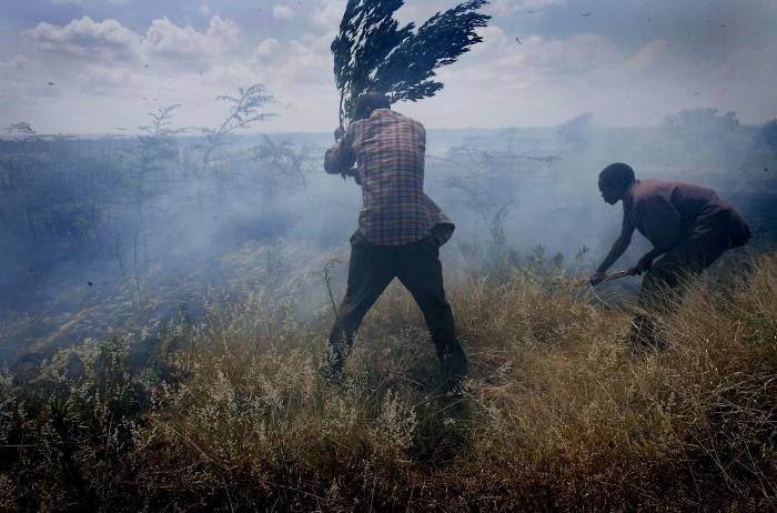 Two men from the Luo tribe, try to put out a fire that was started when a group of youths. Kate Holt.