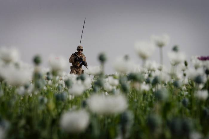 Lance Corporal Bruce Roberts of Fox company of 2/2 US Marines patrols through a poppy field in Mian Poshteh. Kate Holt.
