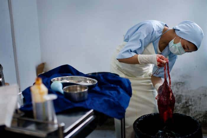 A trained midwife, who has been undergoing midwifery training in Bamyan examines a placenta. Kate Holt.