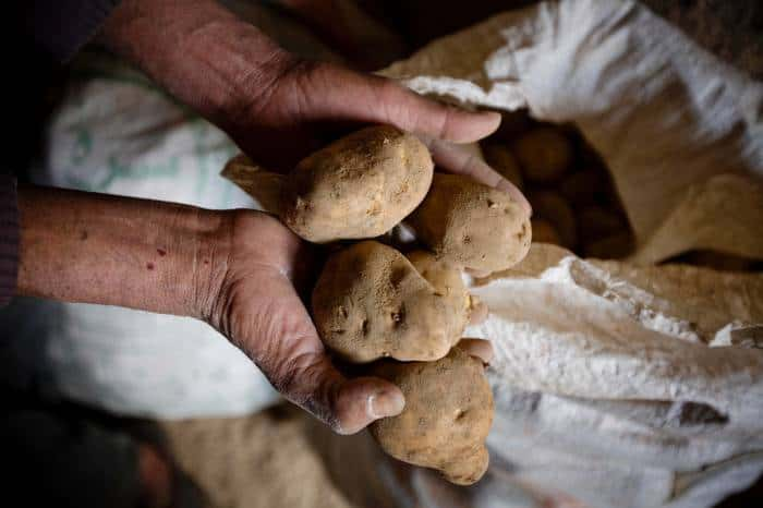 Yousef, who has six children, holds up his harvest of potatoes at his house in the village of Borlak Paein. Kate Holt.
