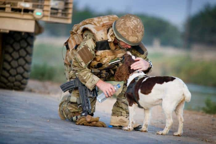 Lance Corporal Matt Robeson from the Royal Army Veterinary Corps gives Molly some water. Kate Holt.