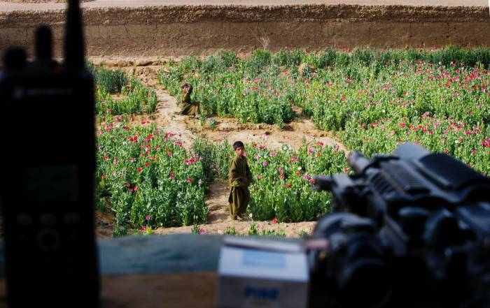 A young boy weeds his families poppy plantation, looked over by US marines in Lakari Bazaar. Kate Holt.