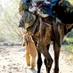 A convoy of refugees crossing the border from Afghanistan to Pakistan, fleeing the US led bombing campaign. Kate Holt.