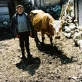 Tomo is 75 and is photographed here with his cow Belusha. Kate Holt.