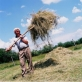 A farmer helps another family with their hay collection as part of a cooperative farm project. Kate Holt.