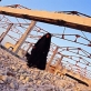 A woman stands in what remains of a chicken farm in Nazariyah, after it was bombed by coalition forces. Kate Holt.