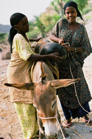 Two young Afar girls collect water on a donkey from a stream, near Tadjoura. Kate Holt.