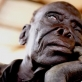 An elderly man, blinded as a result of leprosy he contracted over forty years ago. Kate Holt.