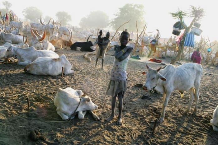 A young Mundari girl stands in the middle of a cattle camp in the early morning light. Kate Holt.