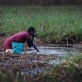 A woman drinks water with her hands from a swamp near to an emergency food distribution site. Kate Holt.