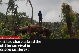 Conservation in DRC